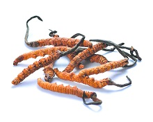 7 Surprising Things About Cordyceps