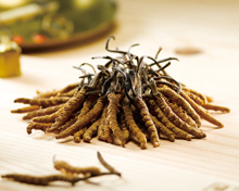 Cordyceps Just Got More Affordable & Sustainable!